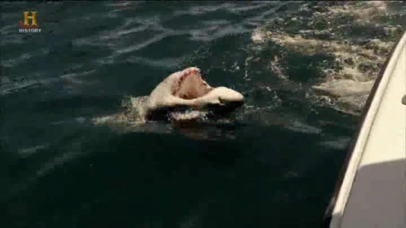 Акульи пастухи Поймать убийцу 01