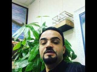 Канарейки Симби и Люми в офисе Мехди