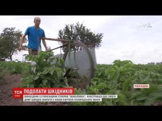 """Винахідник з Рівненщини створив """"жуколовку"""" для збору колорадських жуків"""