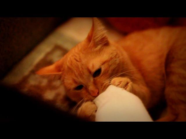 Flёur - Тёплые коты (cover. Саша Капустина)