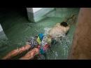 Аварыйны дом на Віцебшчыне: ідзеш у сутарэнне як у экспедыцыю | Аварийный дом в Крулевщине