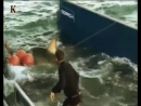 Акульи пастухи Аллея акул 6 я серия 2012