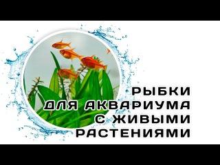 Рыбки для аквариума с живыми растениями