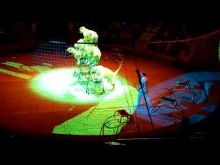 Тульский цирк 2018