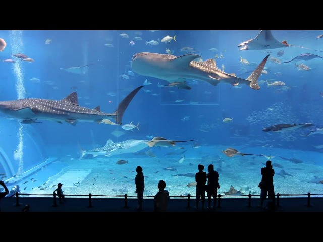Okinawa Churaumi Aquarium (Second Largest in the World) Ocean Expo Park in Okinawa, Japan
