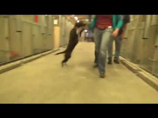 Пёс из приюта не смог сдержать эмоций, когда понял, что его пришли забрать, а