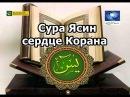Сура Ясин это сердце Корана Чтение на арабском