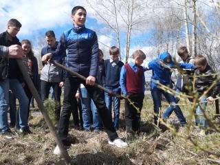 Учащиеся 26 школы высадили саженцы лиственницы, кедра и елей в знак памяти павших на войне