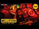 Mellifera Spojuje nás DnB Vinyl mix