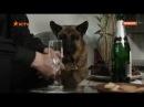 Сериал Пёс 1 сезон 11 серия