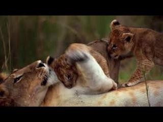 African Cats   ''2011   FuLL  'Filmero