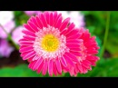 Stunning Flower Garden Relax Music - 3D Oil Paints - Color Therapy - Sleep Music 2 Hours HD 1080P