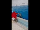Ксюша танцует с дельфином