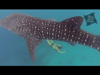 GoPro Awards_ Ocean Ramsey and a Whale Shark.