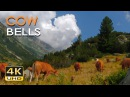 4K Mountain Cows - Cowbell Sounds - Relaxing Animals Nature Video - Ultra HD - 2160p