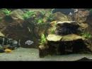 240G Lake Tanganyika tank with Frontosa