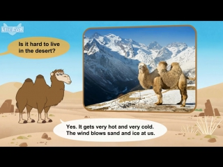 Meet the animals 35camel level 2 by little fox