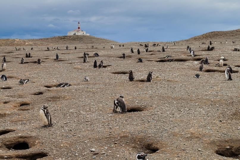12 островов, которые все еще принадлежат животным