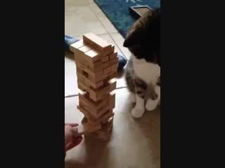Умный кот играет в Jenga
