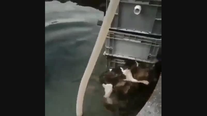 Собачка спасательница 😃
