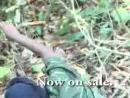 WHO KILLED CAPTAIN ALEX Original Trailer Wakaliwood Uganda