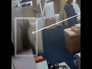 В Москве кот-ниндзя напал на менеджера по продажам
