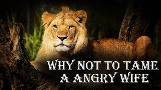 Angry Lioness: Reasons why you should never tame your wife