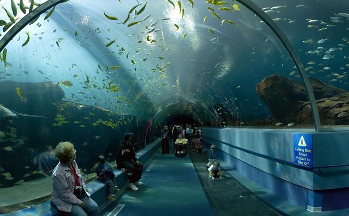 Впечатляющий аквариум Kuroshio Sea - второй по величине аквариум в мире, изображение №2