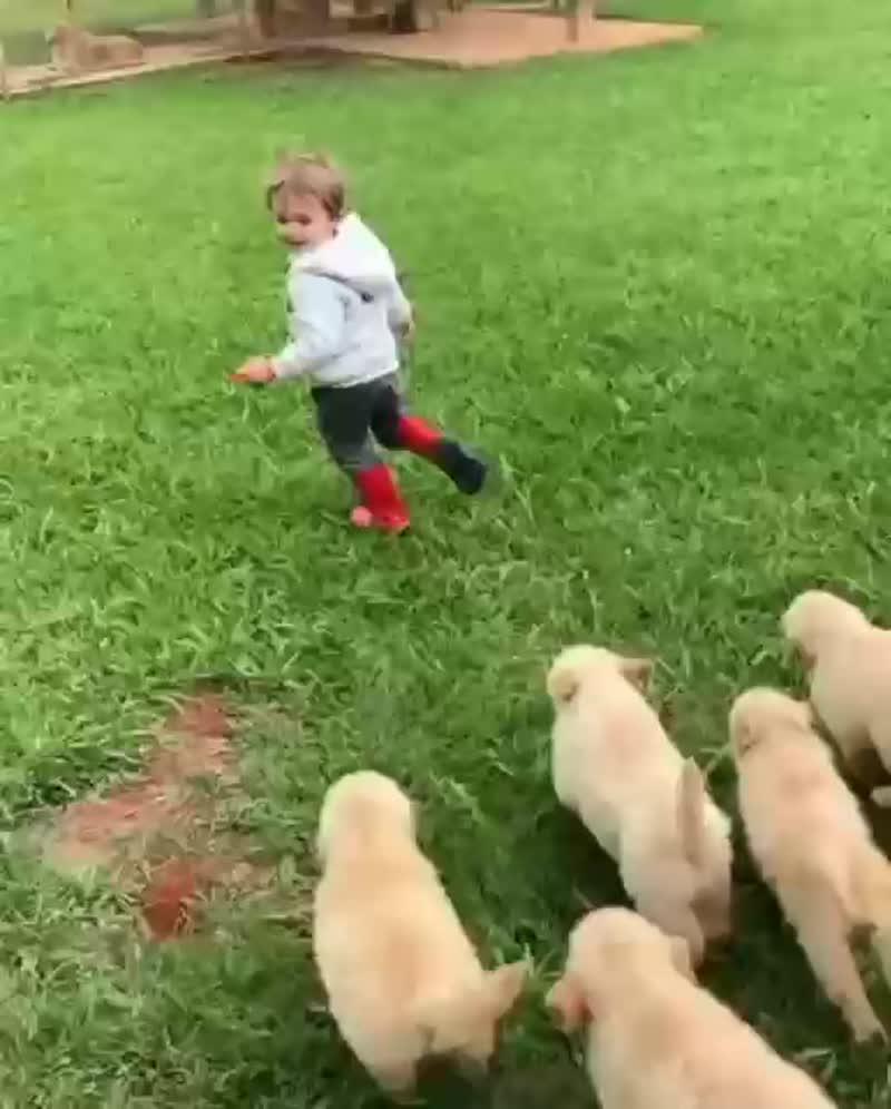 Собаки напали на ребёнка