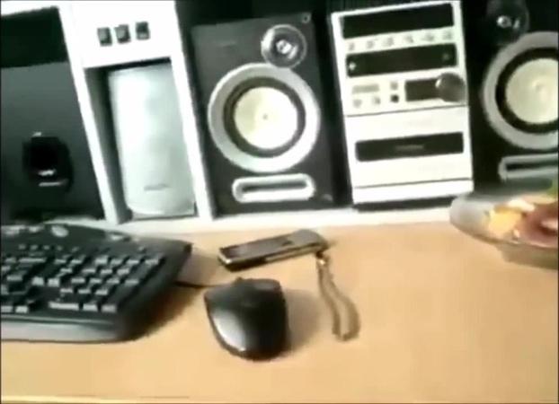 Shitt · coub коуб