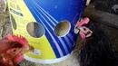 Comedero económico para gallinas (sin desperdicio de comida)/Cheap hen feeder (without food waste)