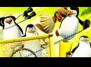 Пингвины из Мадагаскара (заставка)