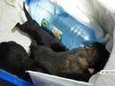 «Я рыдала просто от этого визга» подробности спасения выброшенных в мусорку новорожденных щенков