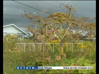 Жгучая природа - жители Новинок проигрывают наступающим растениям