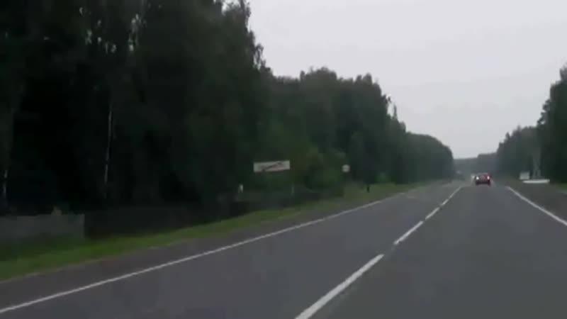 Медведь в Ивановской области