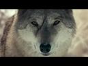 Волчары триллер, приключения, драма офигенный фильм