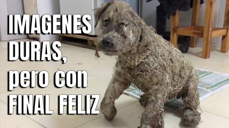 Pascal, el Cachorro que Volvió a Nacer ¿Te Acuerdas
