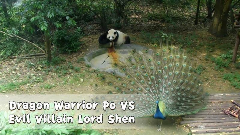 Dragon Warrior Po VS Evil Villain Lord Shen   iPanda
