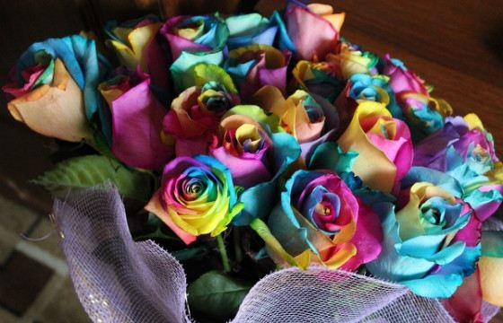 Радужная роза - самый яркий цветок в мире