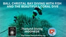 Bali, christal bay diving with fish and the beautifull coral dive with Thailand Diving Pattaya Club