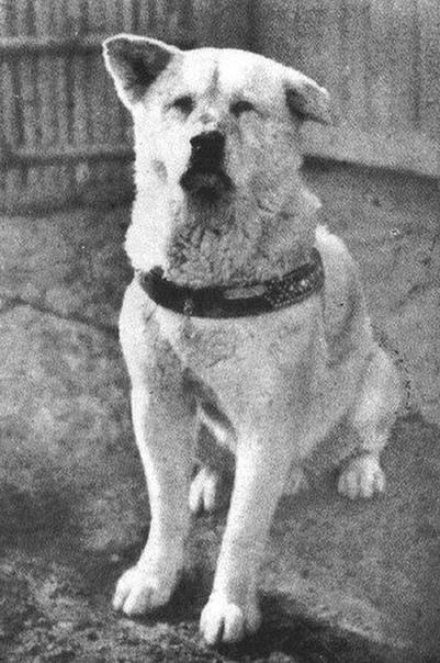 реальный Хатико, 1925 год.