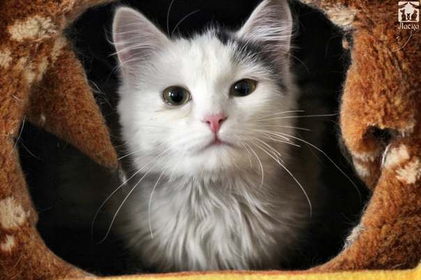 Josera Minette 2 кг - купить корм для кошек: цены, отзывы