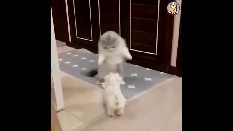 Видео о неуклюжих котомамах