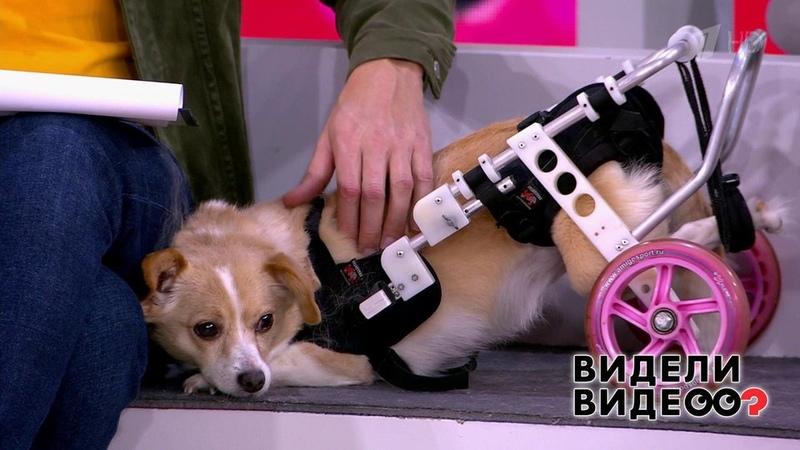 Второй шанс коляска для собаки Видели видео Фрагмент выпуска от19 01 2020