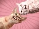 Numa Cat Очень смешная пародия на песню группы O Zone