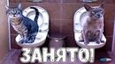 ЛУЧШИЕ ПРИКОЛЫ С ЖИВОТНЫМИ 2019 Смешные Коты и Кошки Приколы с котами до слёз 38