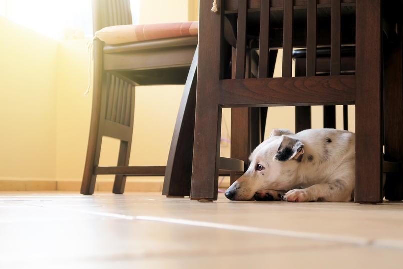 Как перевести собаку на готовый корм?, изображение №4
