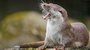СУПЕР подборка смешных животных 14 ржач гарантирован Приколы с забавными животными