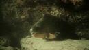 Спящие акулы Юкатана 1975 одиссея жака кусто