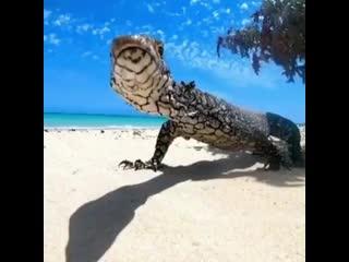 Лежишь такой на пляже и тут подходит чудище